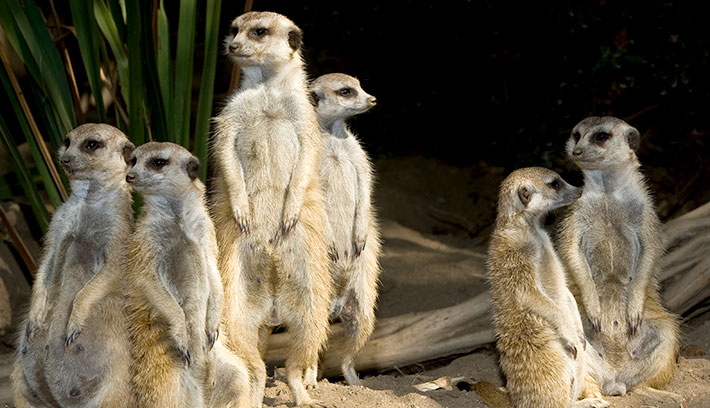 Why Tourism Needs More Meerkats and Fewer Ostriches